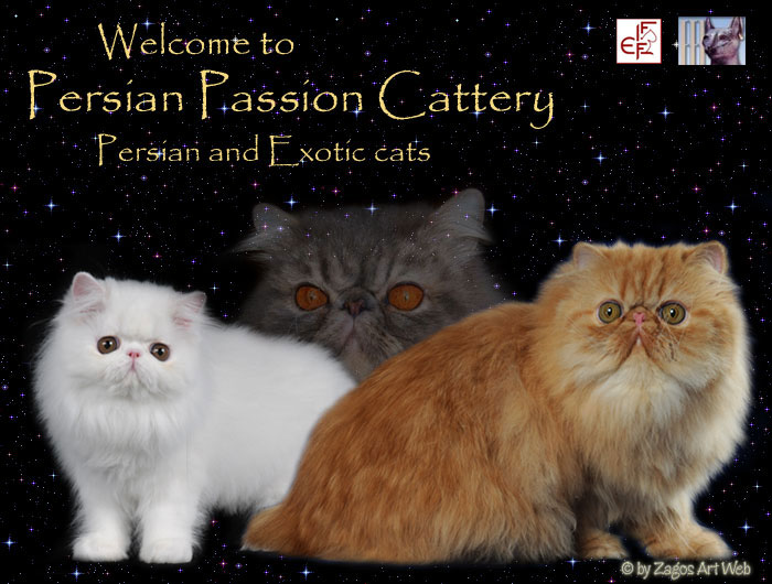 Persian Passion Cattery - Welcome